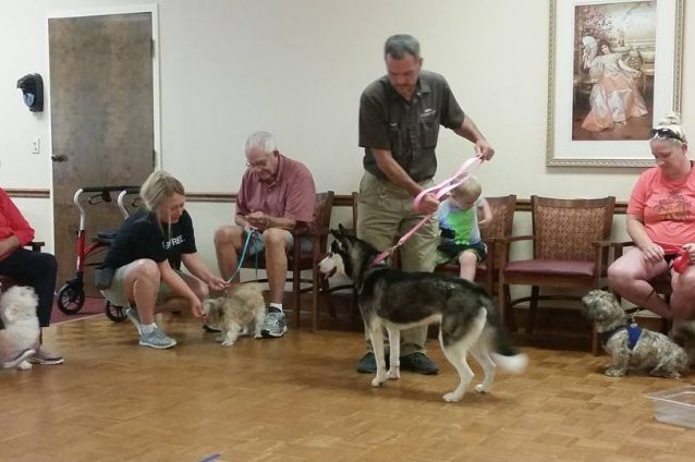 Canine Classes Perfect For The Dog Days Of Summer. And Beyond.