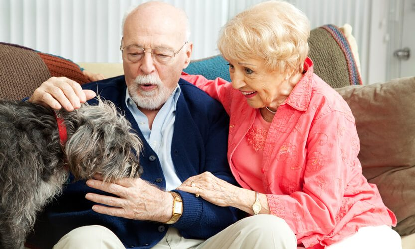 Pet Therapy – Quite Possibly The Best Dog Gone Cure For What Ails You