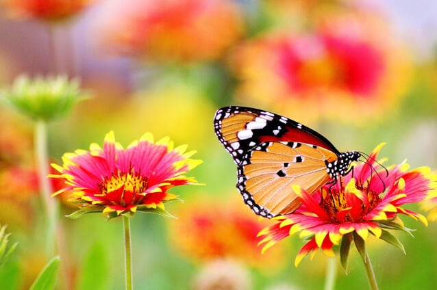 Sunshine Residents Are All Aflutter Over Butterflies